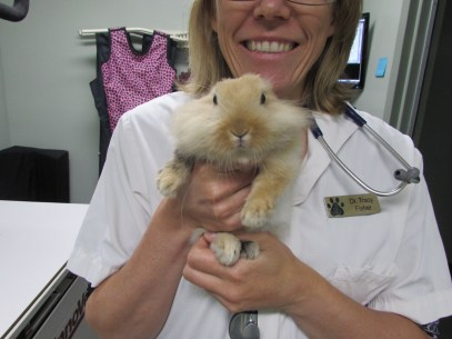 Dr. Fisher with a Lionhead rabbit